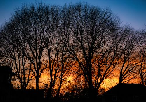 trees sunset sky skyline clouds light dusk twilight colour colourful blue purple orange yellow silhouette contrejour backlit backlight twyford berkshire england britain uk leica dlux typ109 lightroom luminar