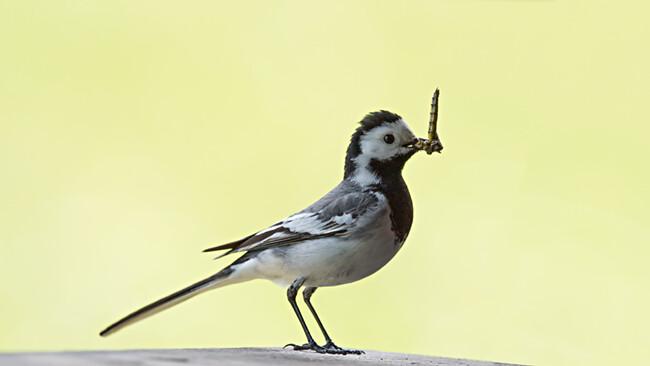 BirdLife im Naturzentrum La Sauge