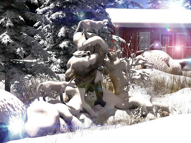 The Polar Refuge