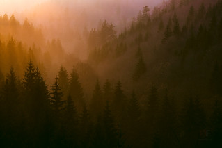 Forest Sunset   by stephan_amm