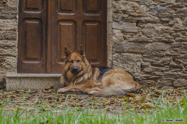El guardián de la puerta....