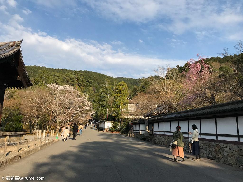 打工度假-京都生活-賞花、野餐-073