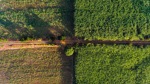 Aerial quadrant shot of sugarcane fields in Hinigaran | by wuestenigel