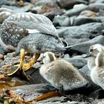 Tierra del Fuego National Park Trekking Presentation