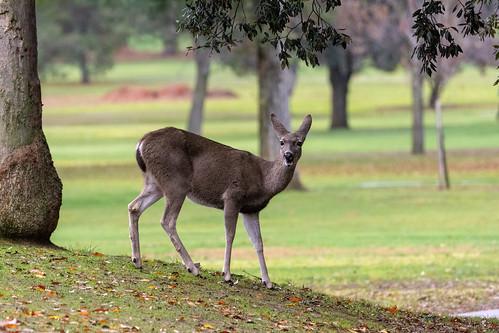 This week's Deer Photo