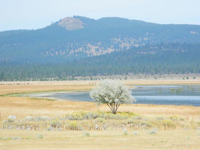 Lone Tree @ Eagle Lake
