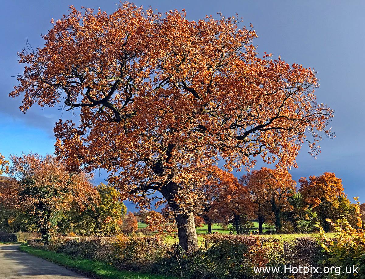HousingITguy,Project365,2nd 365,HotpixUK365,Tone Smith,GoTonySmith,365,2365,one a day,Tony Smith,Hotpix,autumn,tree,leaves,leaf,brown,sunset,country lane,Cheshire,England,UK