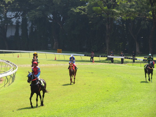 ロイヤルバンコクスポーツクラブのレース後の馬たち