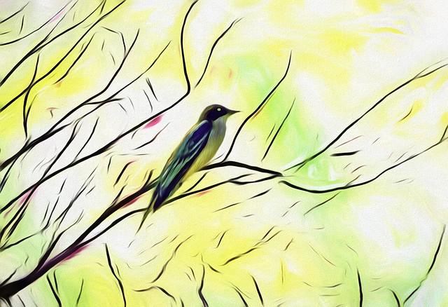 Salt Marsh Bird