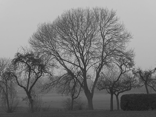 nature landscape plants trees blackwhite bw monochrome panchromatic foggy mist autumn herbst