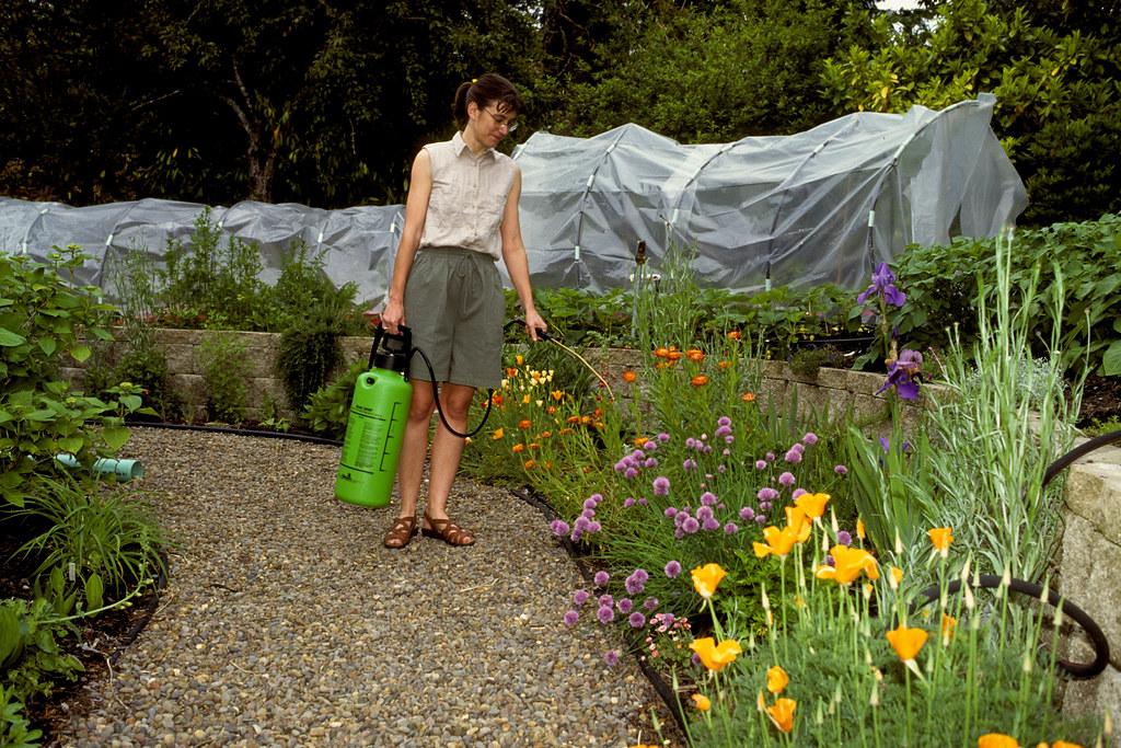 Spraying garden