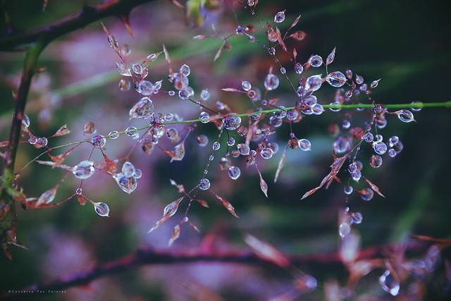 Perlas liquidas