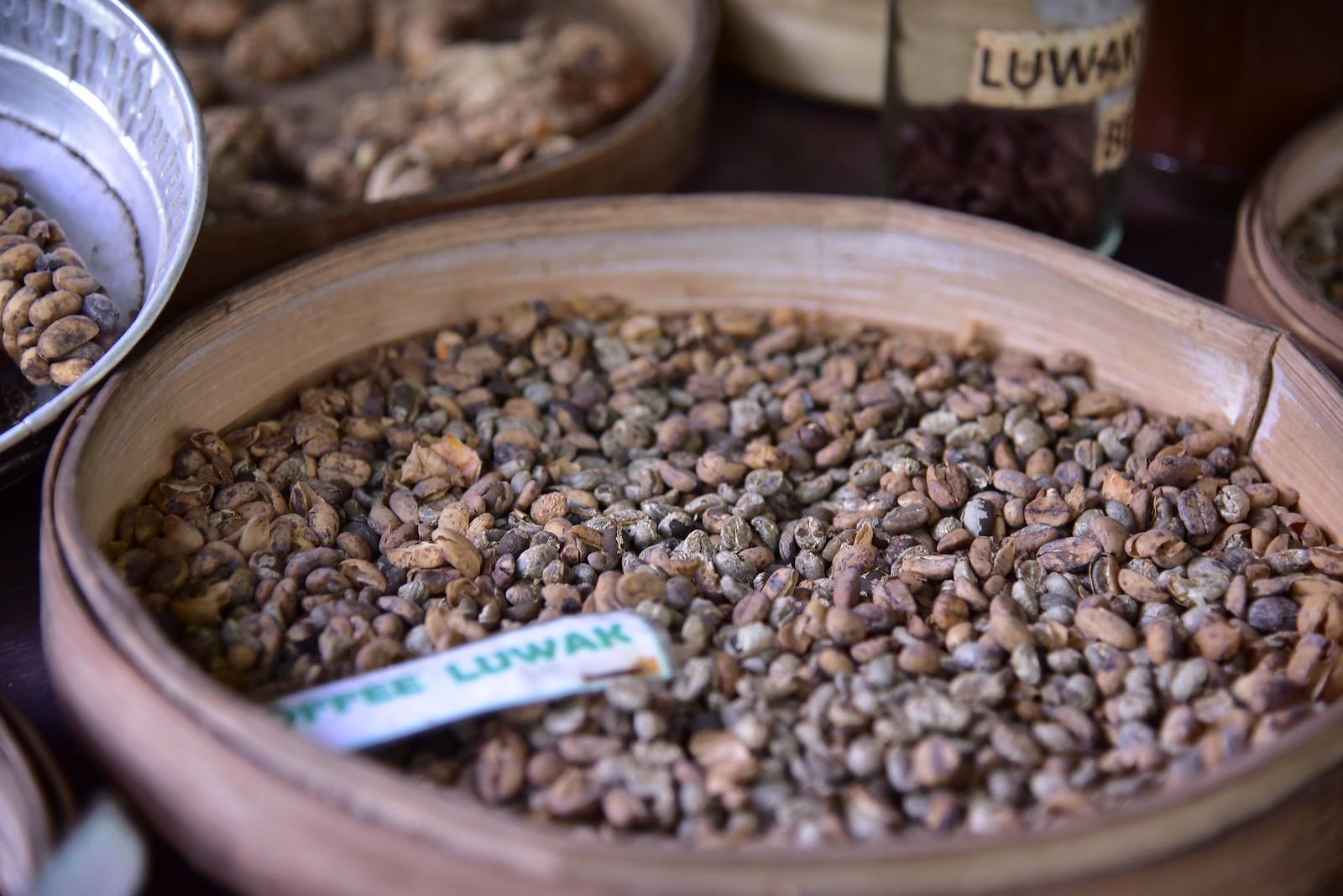 Kopi Luwak- beans cleaned but not yet roasted