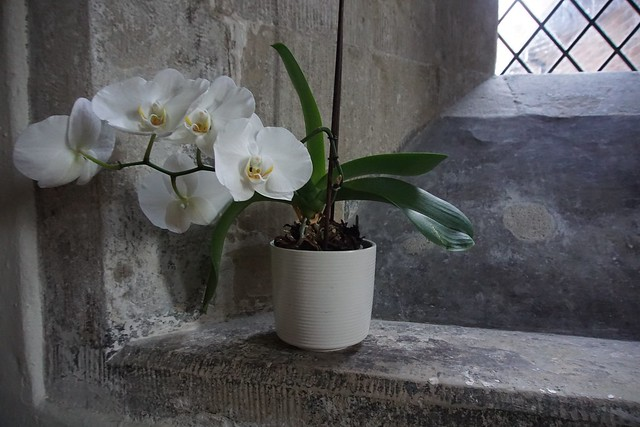 orchid in the meeting room