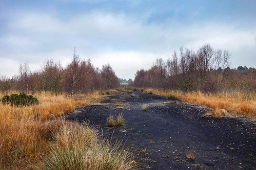 boora bog lough birch peat trees kilmacormac tullamore offaly ireland