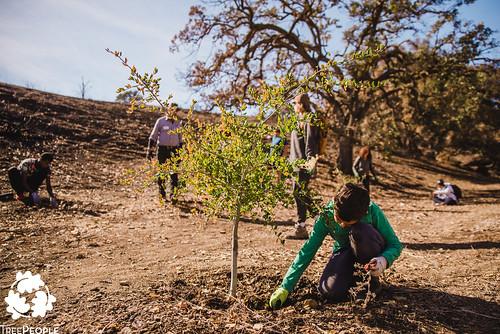 TreePeople Zev Yaroslovsky Open Space tree care