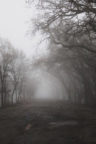 creepy dark fog gothic nature ominous road spooky trees weather winter