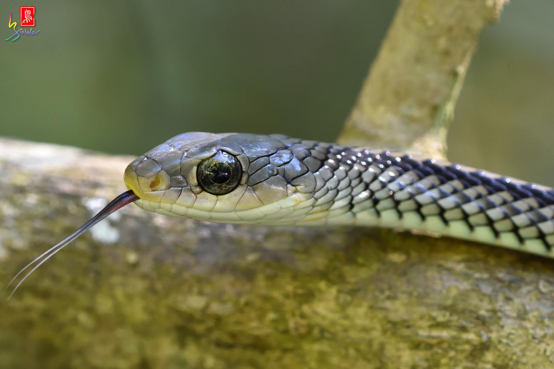 Snake_6392