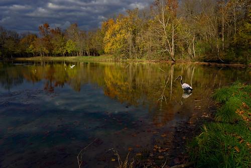 heron pond autumn ozarks missouri