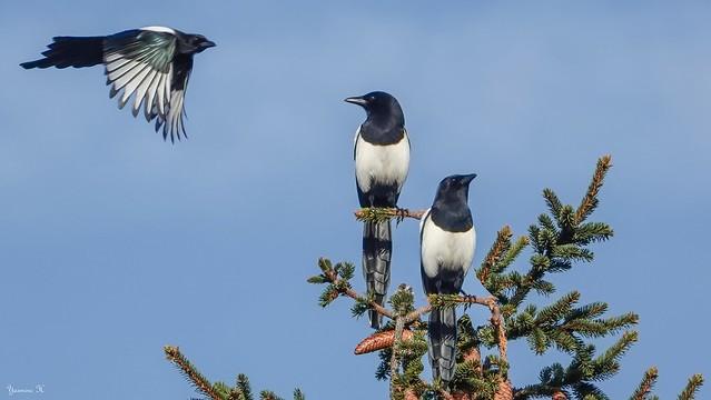 Birds - 6327