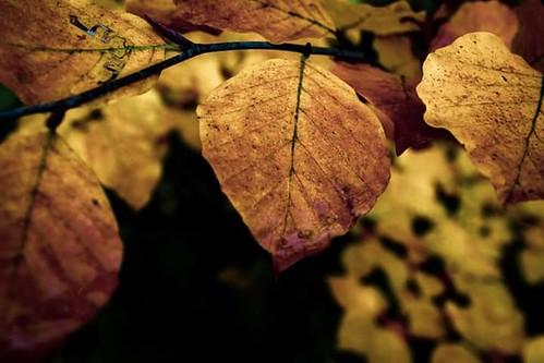automne et ces belle couleurs