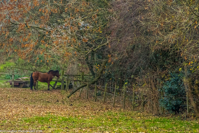 Croxteth Country Park Liverpool