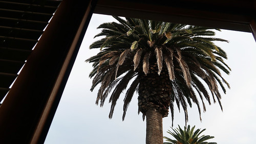 Palm tree outside a house in Redondo Beach | by Parkzer