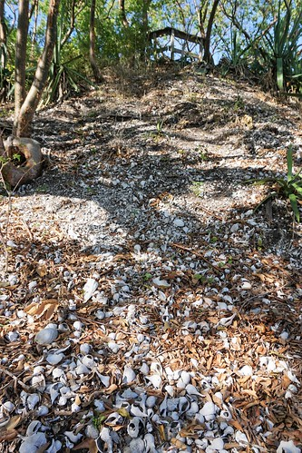 Shell Mound at Calusa Heritage Trail at the Randell Research Center in Pineland, Fla., Dec. 29, 2018 | by JenniferHuber