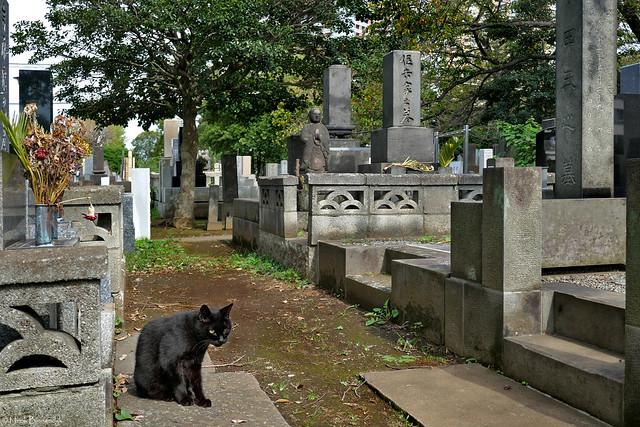 Japan: Tokyo, Yanaka Cemetery cat