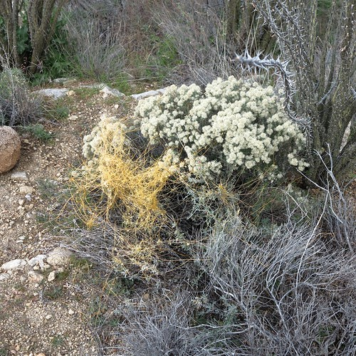 arizona az gestrüpp wilderness blüten blossoms stacheln thorns pricks weave gewebe minimal minimalism minimalismus minimalistisch abstrakt abstract sbrubs sträucher gesträuch