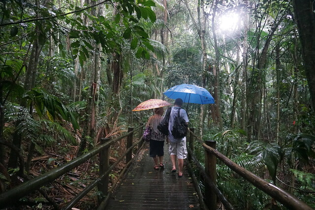 The Spring Tracking, the Botanical Garden of São Paulo, Brazil.