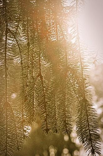 goodmorning good morning sunrise early thanksmas pregiving stones river battlefield national cemetary autumnal nikon nikond7000 dslr luminar skylum edit history civil war murfreesboro tn middle tennessee nashville