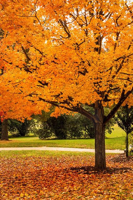 Fall Tree 3-0 F LR 11-1-18 J129