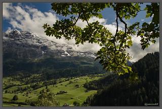 Grindenwald - Massif de l'Eiger - Suisse
