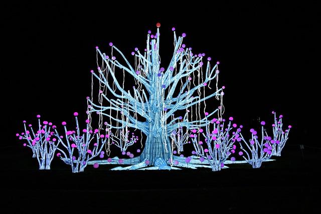 Espèces en voie d'illumination, jardin des plantes - Paris