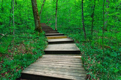 minnesota nerstrand nerstrandbigwoods nerstrandbigwoodsstatepark boardwalk forest green hike hiking hikingtrail spring statepark trail trees unitedstates us