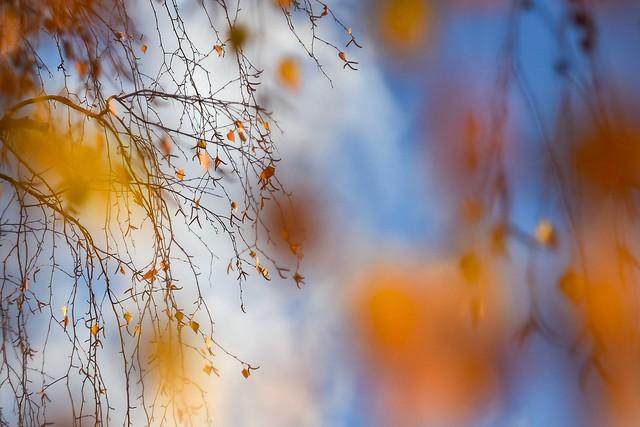 Still autumn.