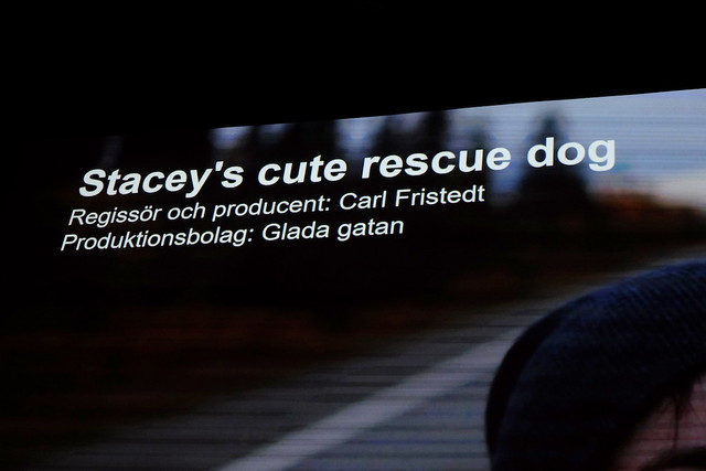Stacey's cute rescue dog