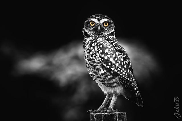 Owl be watching you! SC