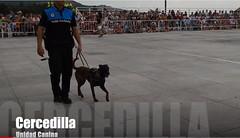 Exhibición unidad canina Policía local Cercedilla