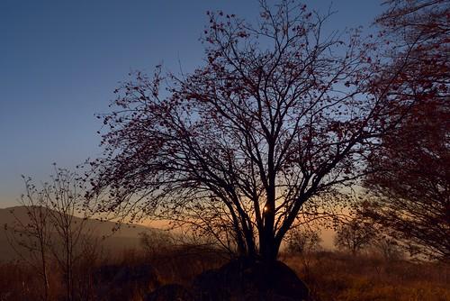 nikond750 nikon d750 tamron2470vc vitosha sofia bulgaria sunset trees