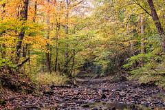 Little Yellow Creek