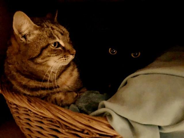 Chitty e Salem