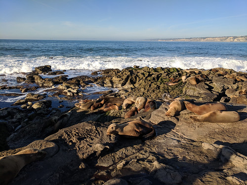 seals @ Rocky Point | by tlkativ