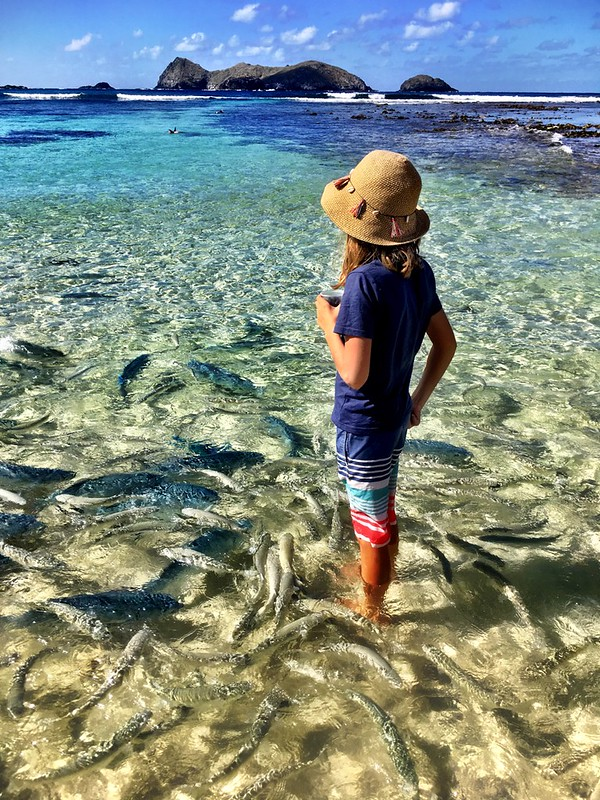 Lord Howe Island : Feeding the fish at Neds Beach