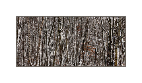 DSCF8299-Mont St.Hilaire Qc. | by bernard marenger photo imagination
