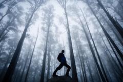 Misty Mt Ellery 1