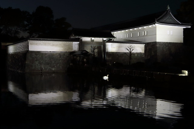 A White Swan in Dark