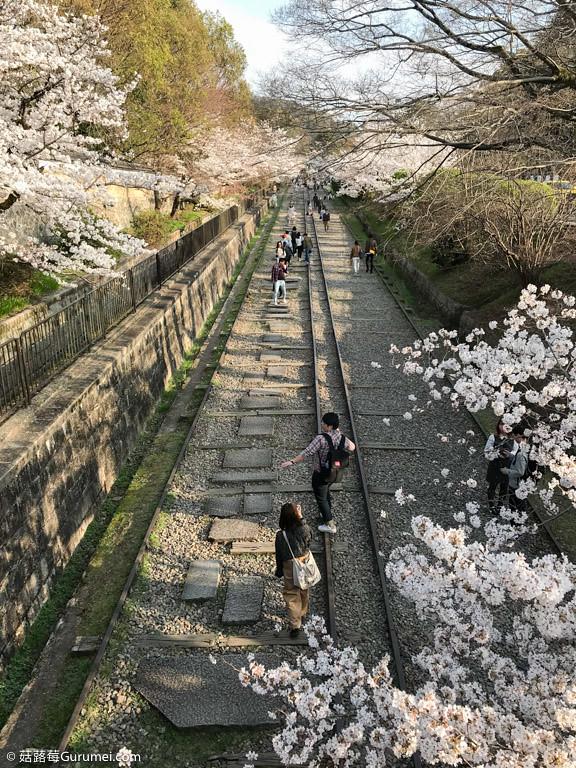 打工度假-京都生活-賞花、野餐-066