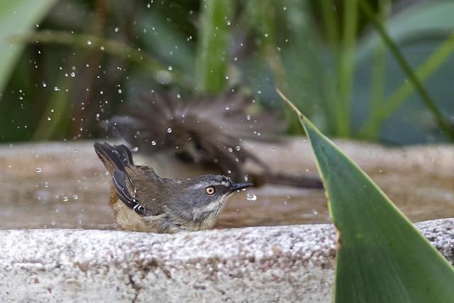Midday Splash